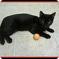 Adopt A Pet :: Cooper - Mobile, AL