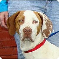 Adopt A Pet :: 007 BOND - Wakefield, RI