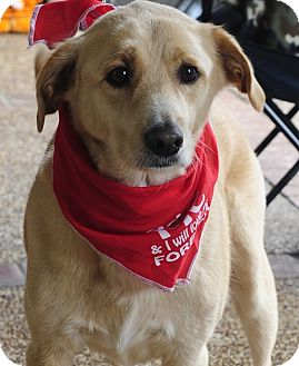 Labrador Retriever Mix Dog for adoption in Greenfield, Wisconsin - George