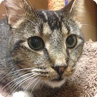 Adopt A Pet :: Alex - Winchester, CA