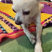 Adopt A Pet :: Esteban - Brooksville, FL