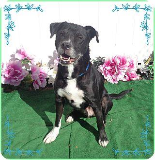 Labrador Retriever Mix Dog for adoption in Marietta, Georgia - JACQUES