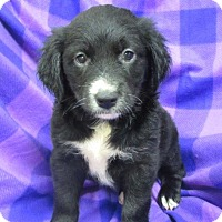 Adopt A Pet :: Sissy - Bartonsville, PA