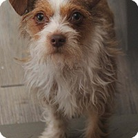 Adopt A Pet :: Taffy - Yuba City, CA