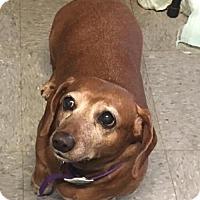 Adopt A Pet :: Emma - York, SC