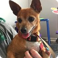 Adopt A Pet :: NAOMI - Hampton, VA