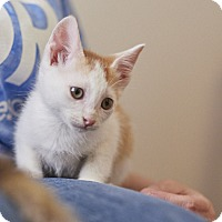 Adopt A Pet :: Periwinkle - Knoxville, TN