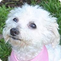 Adopt A Pet :: Felicity - La Costa, CA