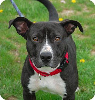 Terrier (Unknown Type, Medium) Mix Dog for adoption in Brunswick, Ohio - Buck