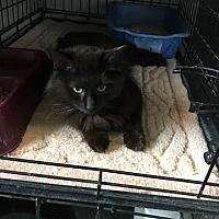 Adopt A Pet :: Minnie - Stanton, MI