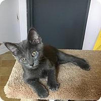 Adopt A Pet :: Zelda - Stanton, MI
