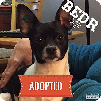 Chihuahua/Jack Russell Terrier Mix Dog for adoption in Regina, Saskatchewan - Jeanie