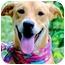 Photo 1 - Nova Scotia Duck-Tolling Retriever/Labrador Retriever Mix Dog for adoption in Pawling, New York - HEATHER