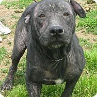 Adopt A Pet :: Hope - Clarksburg, MD