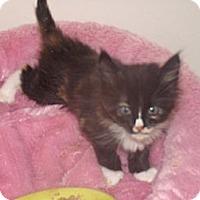 Adopt A Pet :: Vicki - Scottsdale, AZ