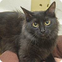 Adopt A Pet :: Sillouette - Milwaukee, WI
