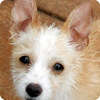 Adopt A Pet :: Baby Tommy - Oakley, CA