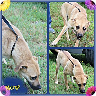 Shepherd (Unknown Type) Mix Dog for adoption in Benton, Arkansas - Marge