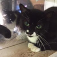 Adopt A Pet :: Cassandra - Porter, TX