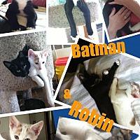 Adopt A Pet :: Batman and Robin - Brentwood, NY