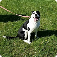 Adopt A Pet :: McCoy - Cameron, MO