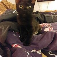 Adopt A Pet :: Abby - LaGrange Park, IL