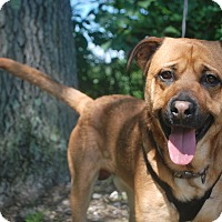 Adopt A Pet :: Eli - New Castle, PA