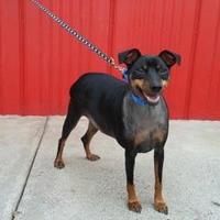 Adopt A Pet :: Rufus - Camano Island, WA