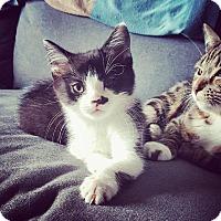 Adopt A Pet :: Pablo - Brainardsville, NY