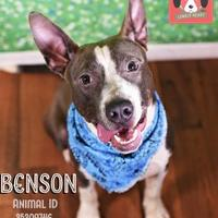 Adopt A Pet :: Benson* - Lonely Heart - Gulfport, MS