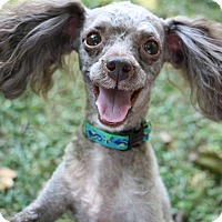 Adopt A Pet :: marcell - Greensboro, NC