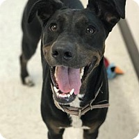 Adopt A Pet :: Libby - Binghamton, NY
