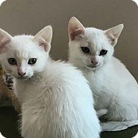 Adopt A Pet :: Sami - Ypsilanti, MI