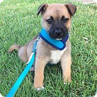 Adopt A Pet :: Finn - Woodstock, GA