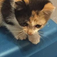 Adopt A Pet :: Krystal - Plattekill, NY