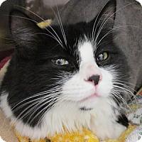 Adopt A Pet :: Dewey - Gilbert, AZ