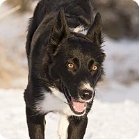 Adopt A Pet :: Rue - Salt Lake City, UT