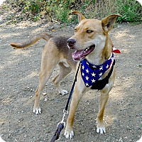 Adopt A Pet :: Jake guys best buddy - Sacramento, CA