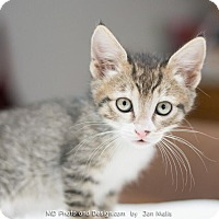 Adopt A Pet :: Brian - Fountain Hills, AZ