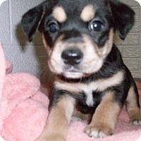 Adopt A Pet :: Baby Maurice - Augusta County, VA