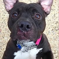 Adopt A Pet :: OLIVE - Tinton Falls, NJ