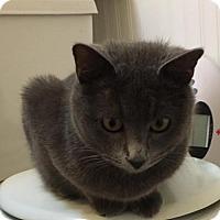 Adopt A Pet :: Whimsy - Denver, CO