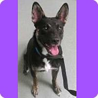 Adopt A Pet :: Stoli - AUR, IL