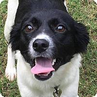 Border Collie Mix Puppy for adoption in CUMMING, Georgia - Jojo