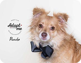 Adopt A Pet :: Pancho  - Houston, TX