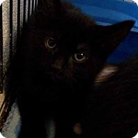 Adopt A Pet :: Alice - Jefferson, NC