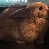 Adopt A Pet :: Kong - Edmonton, AB