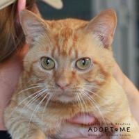 Adopt A Pet :: Romano - Edwardsville, IL