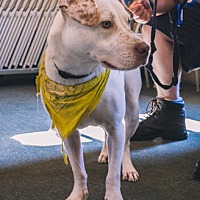Adopt A Pet :: Bonnie - Indian Trail, NC