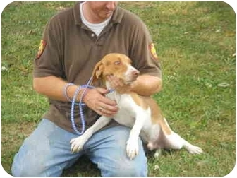 Beagle Mix Dog for adoption in Olney, Illinois - Wes